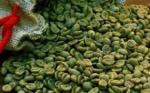 القهوة الخضراء تقضي على السمنة!